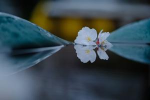 桜 大満足 市バス9系統 散策撮影会  4月2日 京都 @ 京都市 | 京都府 | 日本